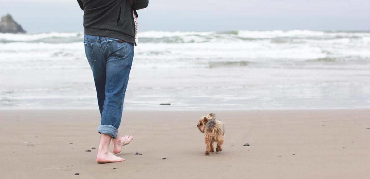 Person with little dog on the beach.